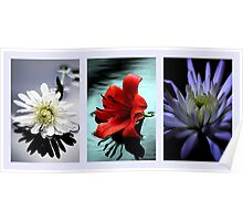 Triptych of flowers Poster