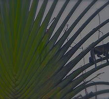 MONKEY PALM by NICK COBURN PHILLIPS