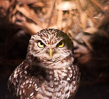 Burrowing Owl by ejlinkphoto