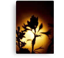 Flower Shadow Canvas Print