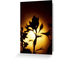 Flower Shadow Greeting Card