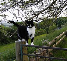 Cat on Gate Post by moor2sea