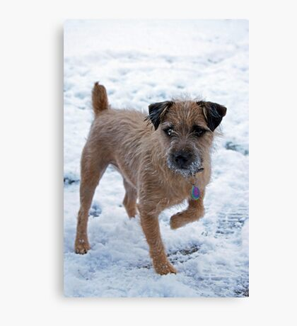Monty owning the snow Canvas Print