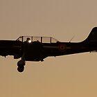 Yak 52  last light by Shaun O'Malley