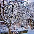 Winter Dawn Garden by Marilyn Cornwell