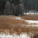 Winter colors in winter time by Antanas