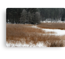Winter colors in winter time Canvas Print
