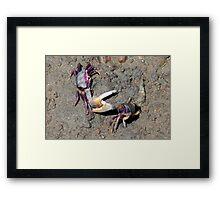 Dueling crabs Framed Print