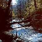 Ricketts Glen circa 1979 by Paul Gitto