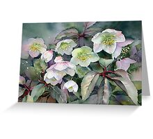 February Hellebores Greeting Card