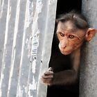 Urban Monkey by lamiel