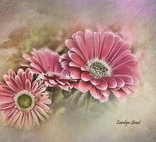 Pink Bloomers by Carolyn Staut
