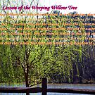 Lesson From the Weeping Willow by Charldia