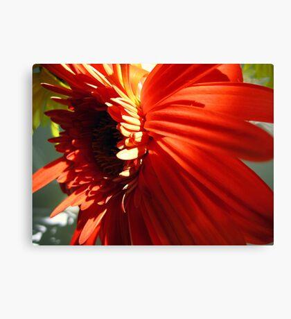 A flower Canvas Print