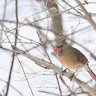 Female cardinal Feb. 2011 by mltrue