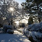 Sunburst through snowy trees - Moorhaven, South Dartmoor by moor2sea