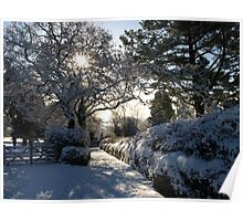 Sunburst through snowy trees - Moorhaven, South Dartmoor Poster