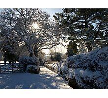 Sunburst through snowy trees - Moorhaven, South Dartmoor Photographic Print