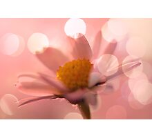 Daisy Waisy Macro Photographic Print