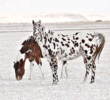 Dalmation Horse by Patrick Kavanagh