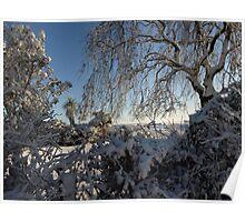 Soft snow laden garden shrubs and trees Poster