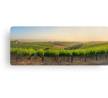 Golden Vineyard  XL panorama Canvas Print