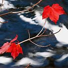 Maple Goodies by Dawne Olson
