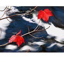 Maple Goodies Photographic Print