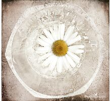 Daisy tile Photographic Print