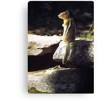 Inquisitive by nature Canvas Print