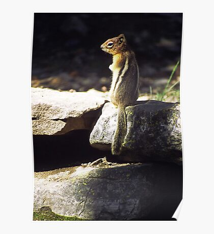 Inquisitive by nature Poster