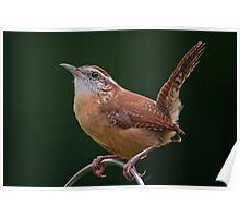 Little Bird with a Big Attitude Poster