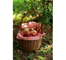 Little Red Riding Hood's Apples Basket Photographic Print