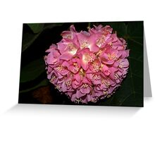 Pink Ball Tropical Hydrangea Greeting Card