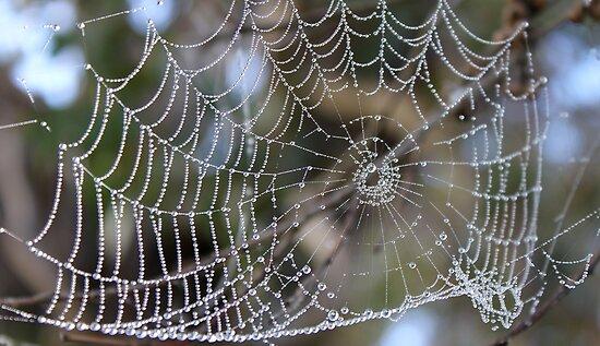 Nature's Jewels by yolanda