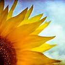 { sunflower gaze } by Brooke Reynolds