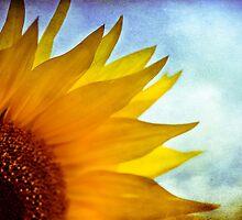 { sunflower gaze } by Brooke Reynolds