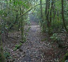 Falcorostrum Loop Walk, Border Ranges (2) by Margaret  Hyde