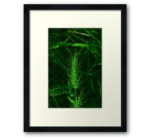 barley pop Framed Print