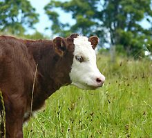 Heifer Calf by Margaret Stockdale