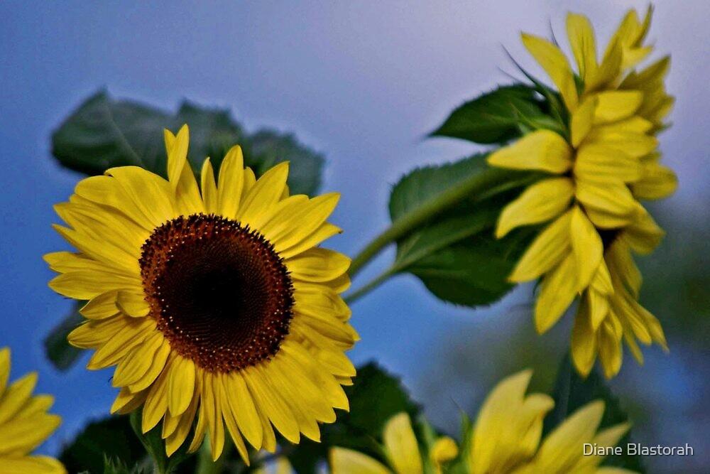 Sunflowers for my Sister by Diane Blastorah