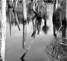 swamp by pic4you