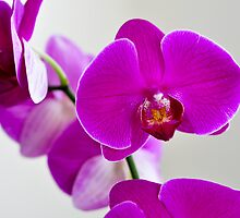 Orchids Close by Donald Darling