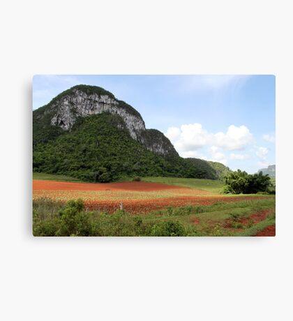 Cuban view Canvas Print