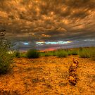 Another Log Enjoys A Sunset by Bob Larson