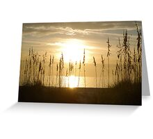 Sunset through sea oats 2 Greeting Card