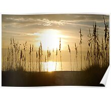 Sunset through sea oats 2 Poster
