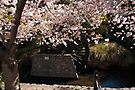 Blossom and Mill Wheel, Christchurch by Odille Esmonde-Morgan