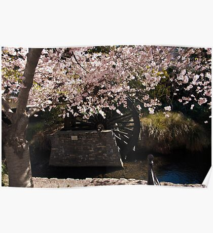 Blossom and Mill Wheel, Christchurch Poster