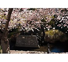 Blossom and Mill Wheel, Christchurch Photographic Print
